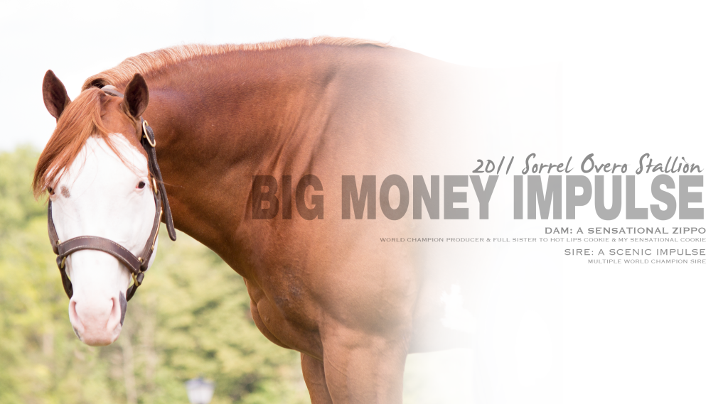 Big Money Impulse_Stallion Page