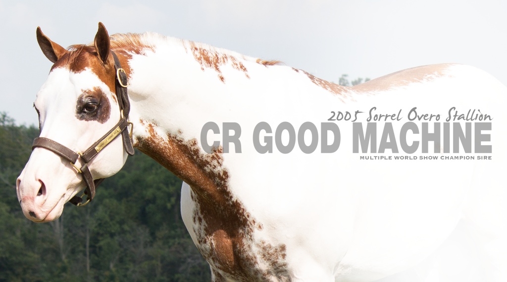 CR Good Machine_Stallion Page