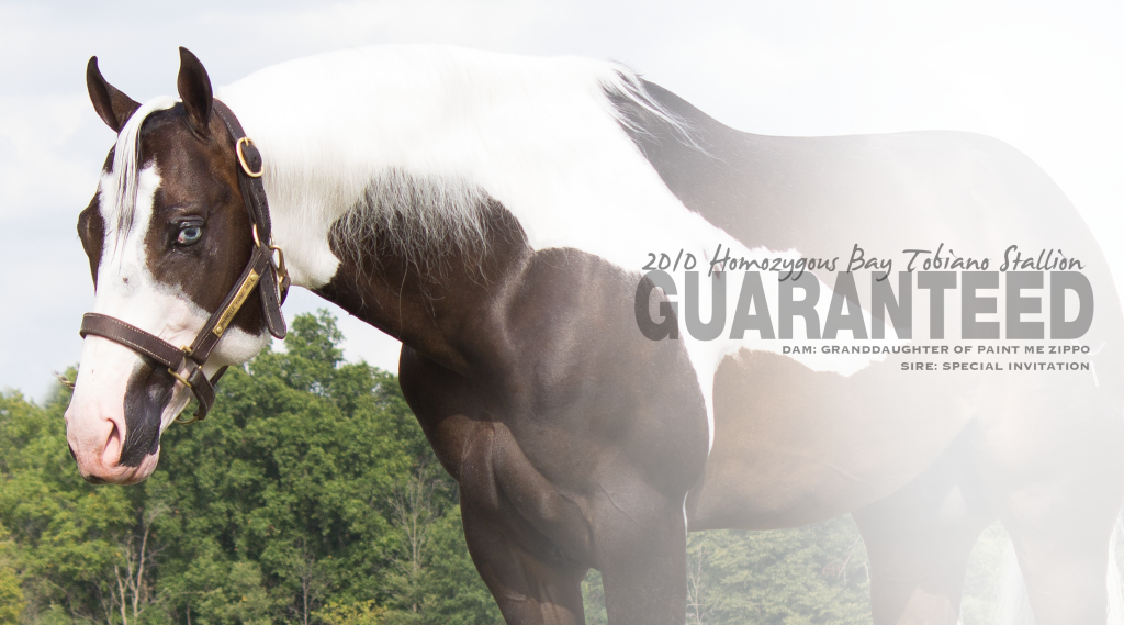 Guaranteed_Stallion Page