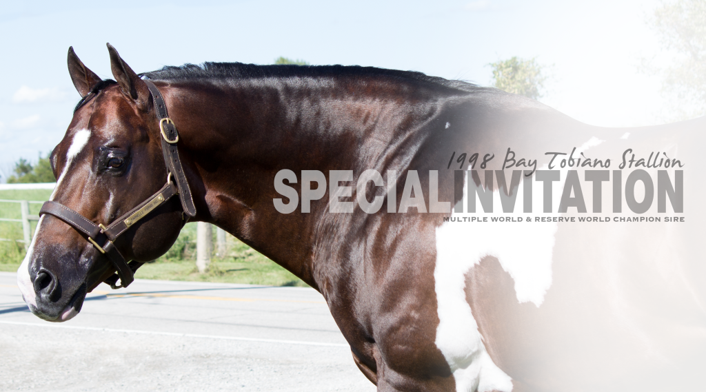Special Invitation_Stallion Page